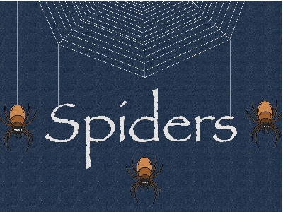 Team Spiders